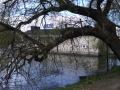 L-badet-träd